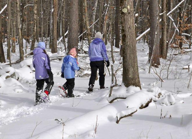 Emmenez la famille faire une randonnée dans les bois.