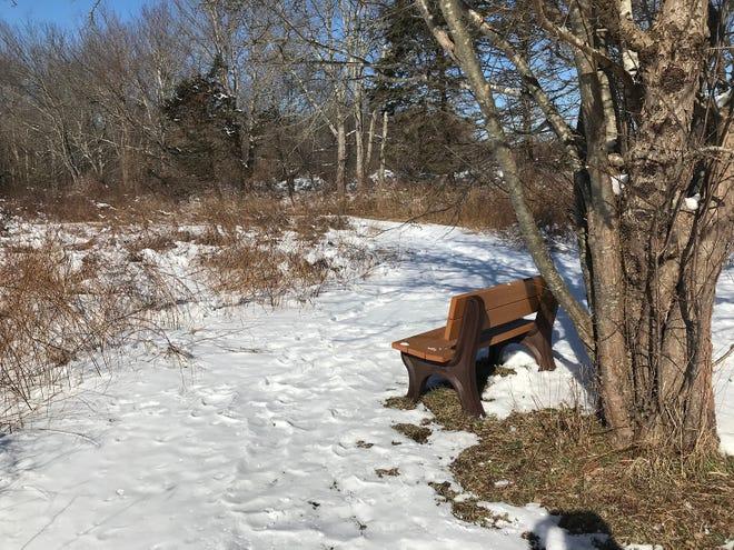 Un banc permet aux ornithologues amateurs de faire une pause dans la réserve Little Creek pour profiter de l'habitat naturel.