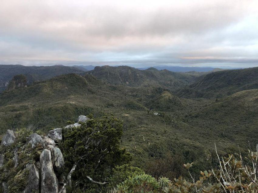 Louchez et vous le verrez: la cabane des Pinnacles du Kauaeranga Kauri Trail.