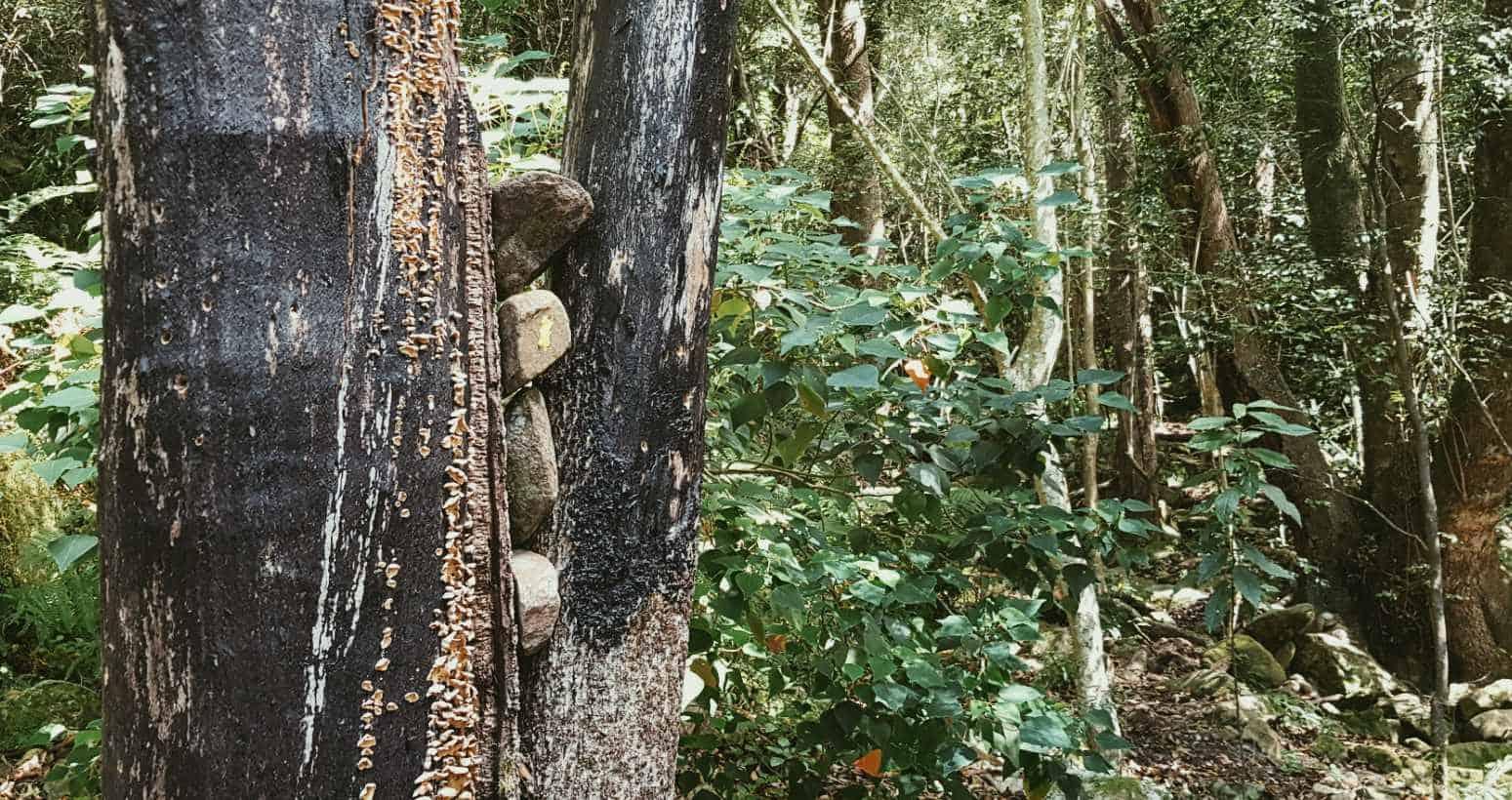 Sentier de la gorge sombre commencer le feu marqueur d'arbre endommagé