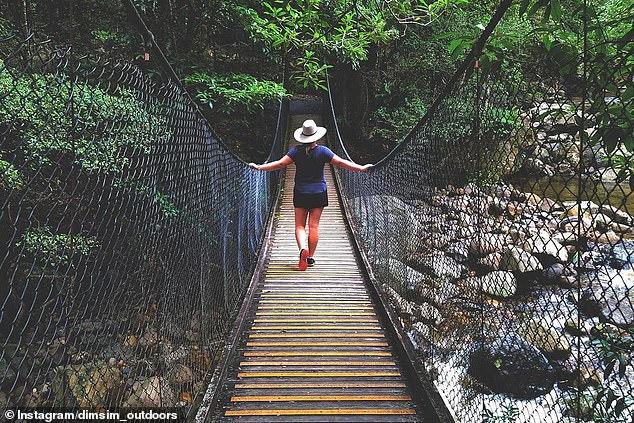 Sa promenade en boucle dans la forêt tropicale de Minnamurra s'étend sur 1,6 km et plonge les randonneurs dans la forêt tropicale dense et luxuriante