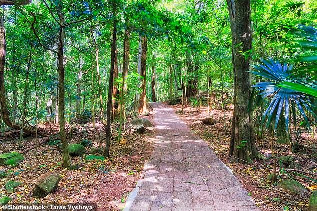 Minnamurra Rainforest propose des sentiers de randonnée adaptés aux familles et aux fauteuils roulants, parfaits pour une escapade d'une journée