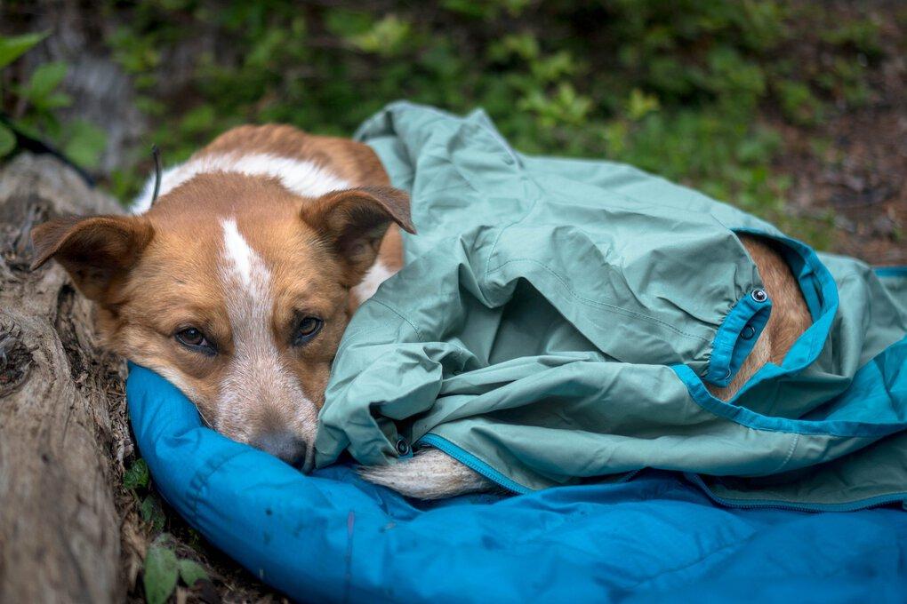 Jen Sotolongo, l'auteur de cette histoire, a appris l'importance d'apporter une veste pour son chien, Sitka, lors d'un voyage de randonnée à Marmot Pass dans les montagnes olympiques.  Alors que le temps inhabituellement froid le laissait frissonner au camp entre les randonnées, elle lui a offert son propre sac de couchage pendant la journée.  (Jen Sotolongo)