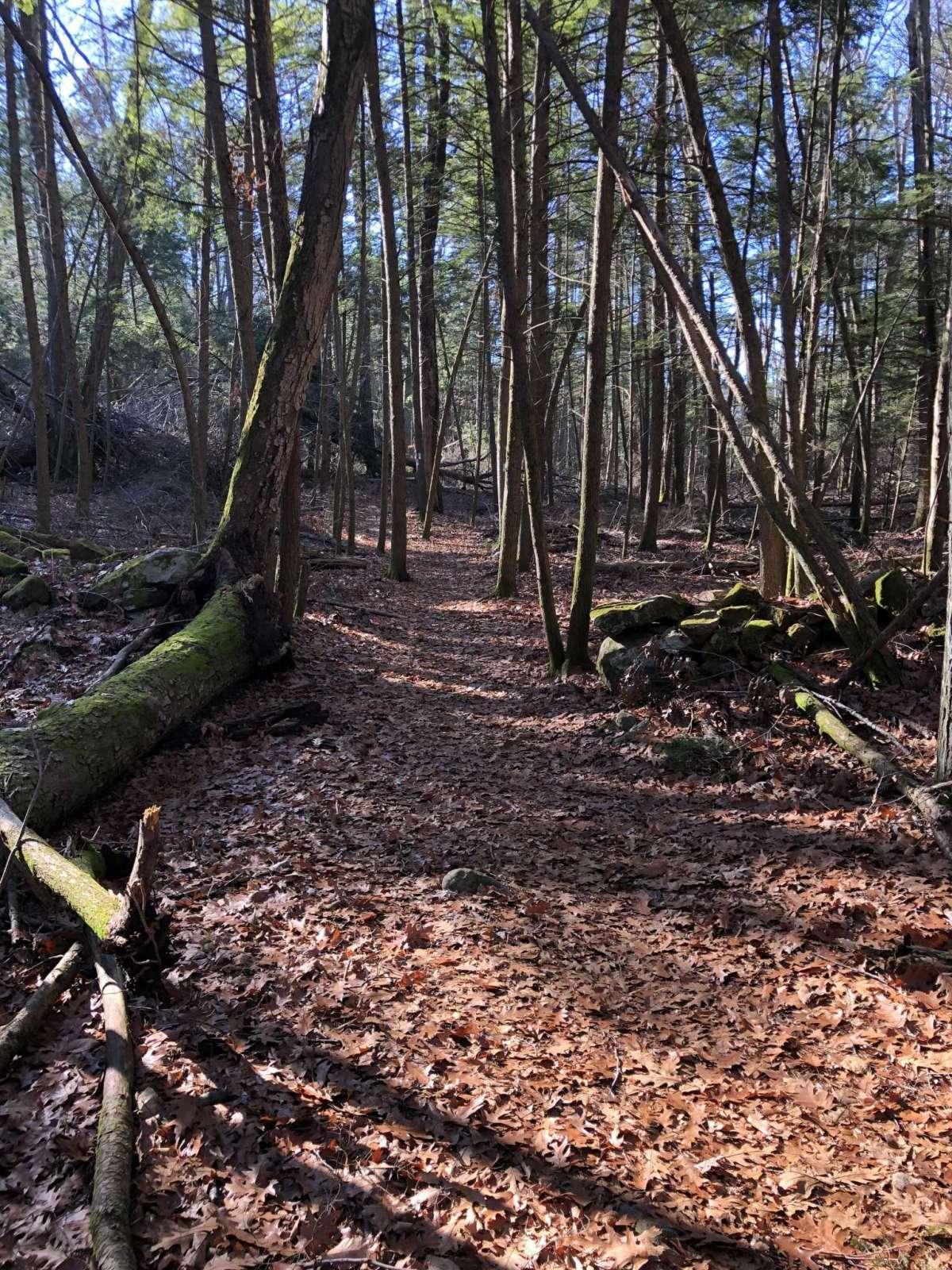 Leur plus longue randonnée a eu lieu au Kettleton State Park à Southbury.