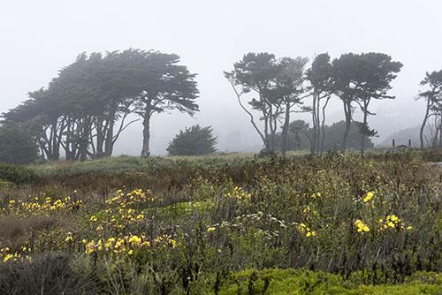 Image du parc Half Moon Bay