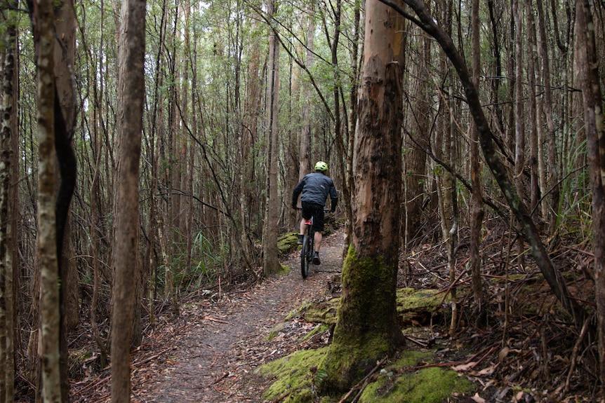 Un cycliste de montagne s'éloigne de la caméra dans une forêt.