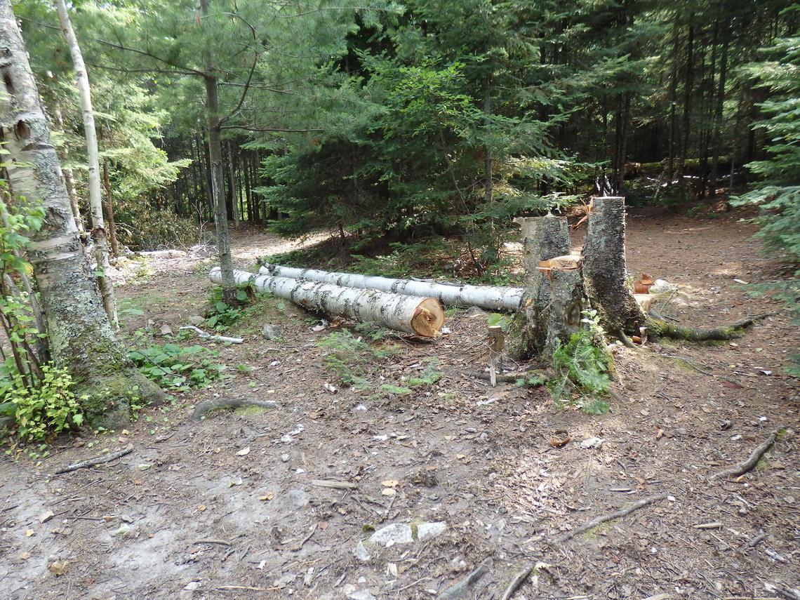Arbres coupés pour le bois de chauffage dans la région sauvage des eaux Boundary Canoe dans le nord du Minnesota